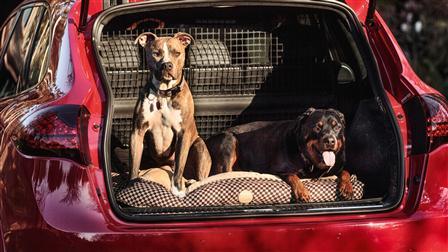 Kim Wolfkill's dogs